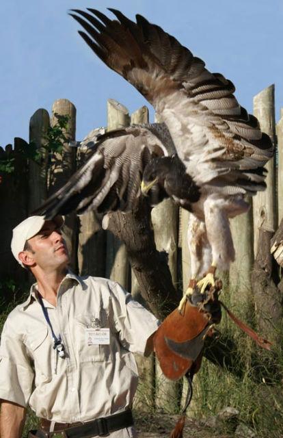 Las aves rapaces, la atracción de Temaikén en octubre.