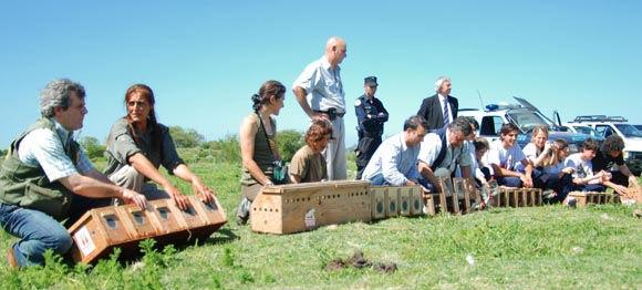 Temaikén y la Dirección Nacional de Fauna realizaron la suelta en la Reserva Municipal de Pilar.