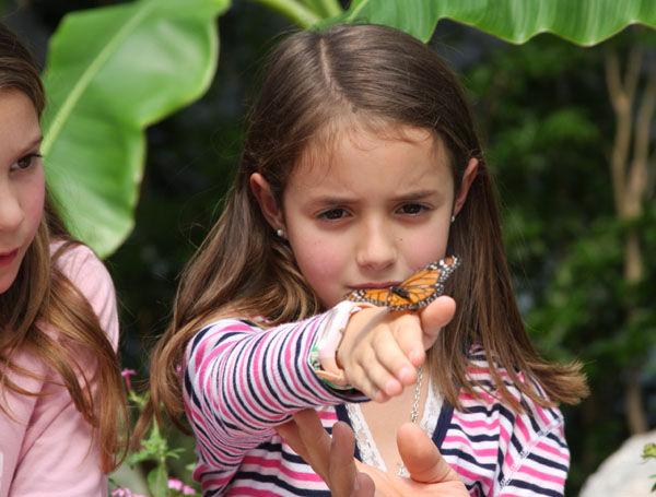 Las mariposas, un nuevo atractivo para chicos y grandes en Temaikèn.