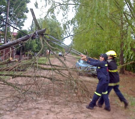 Bomberos retiran ramas caídas sobre cables de un poste que también cedió.
