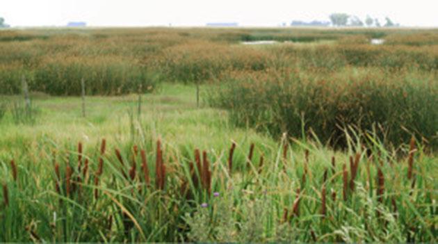 Concientización. La situación de los humedales del río Luján será parte de la jornada.