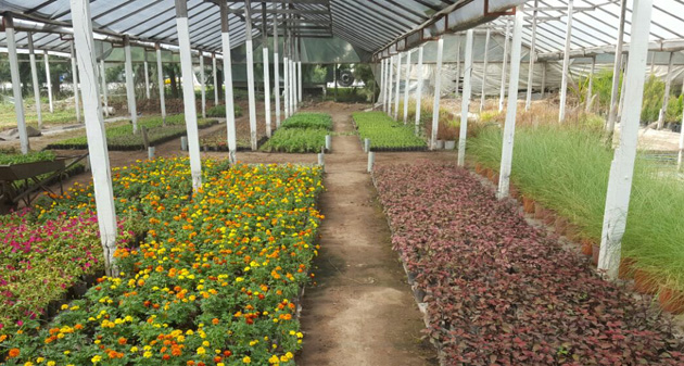El vivero municipal proveer m s de 50 mil plantines a for Viveros en escobar